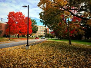 University of Maine Campus; Orono, Maine