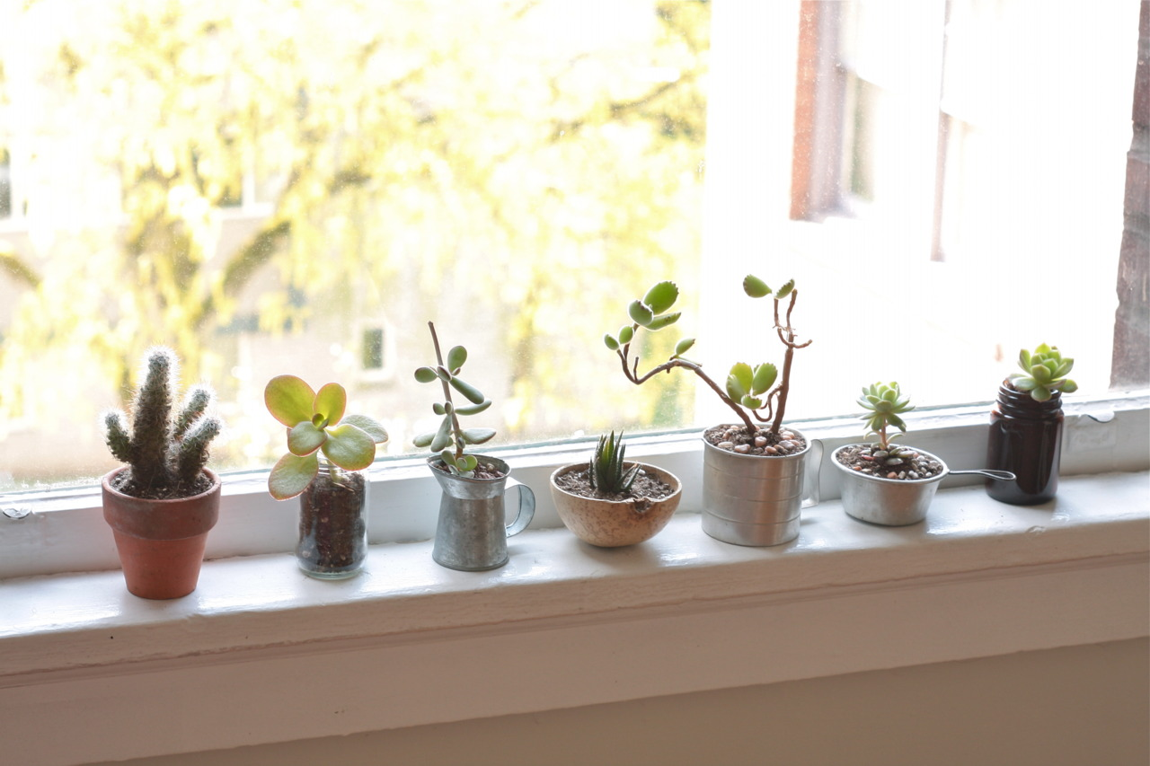 Tips for First-Time Succulent Parents