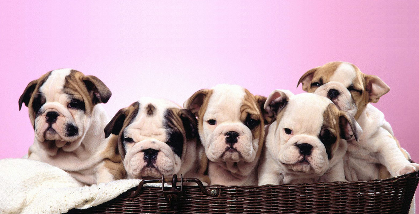 The 7 Best Dog Breeds For College Students